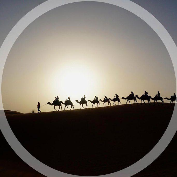 camels-in-the-sahara-JERZYEK